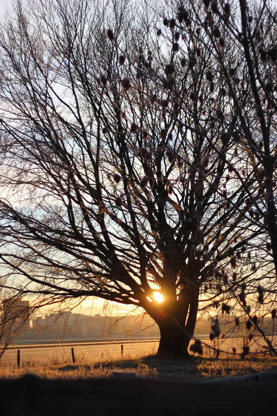 IMG_0003a_Natur_Baum_Winter_Sonne_cold_sun_ConnyDoll