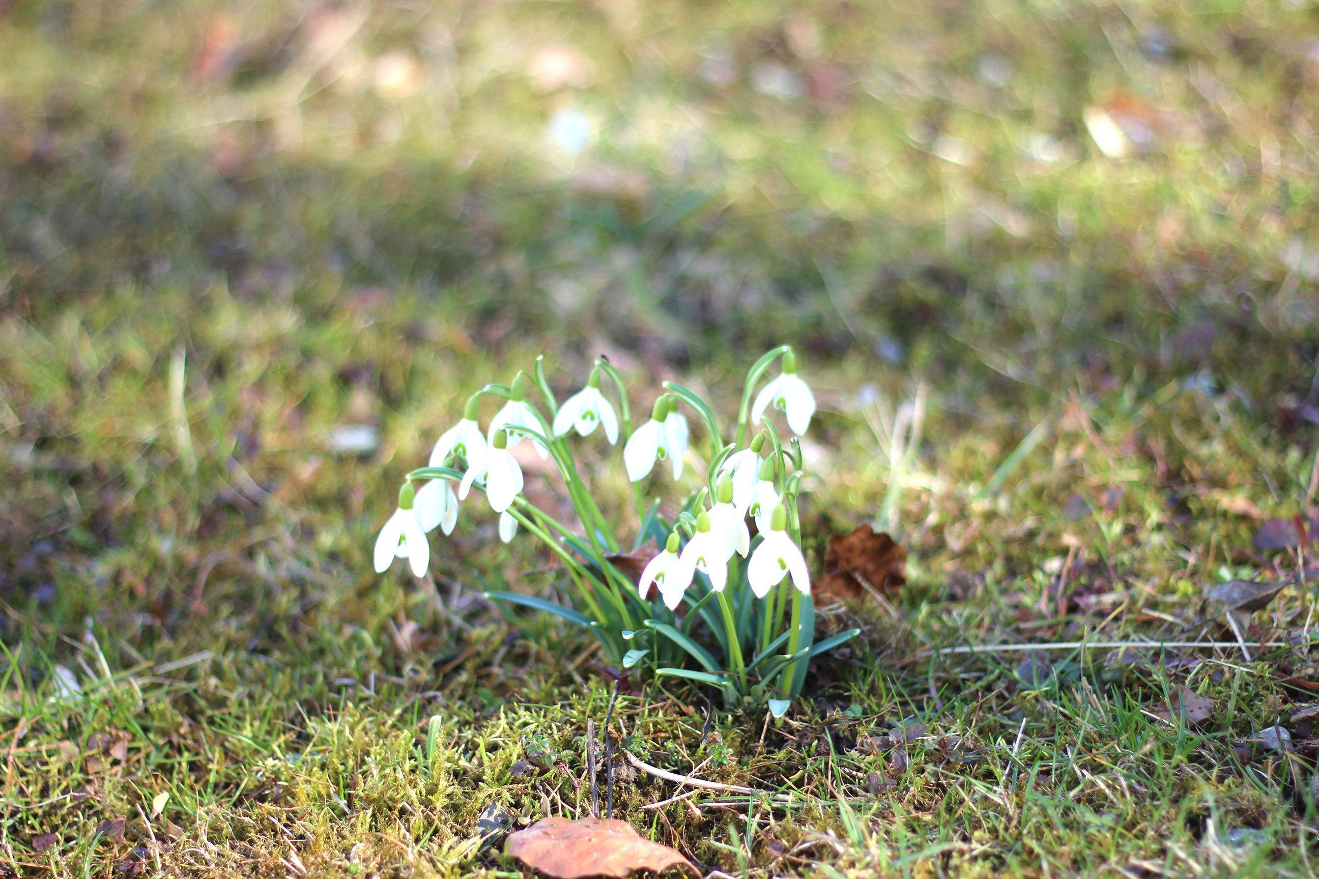 Schneeglöckchen, Frühling, Bayern, conny Doll, Lifestyleblog