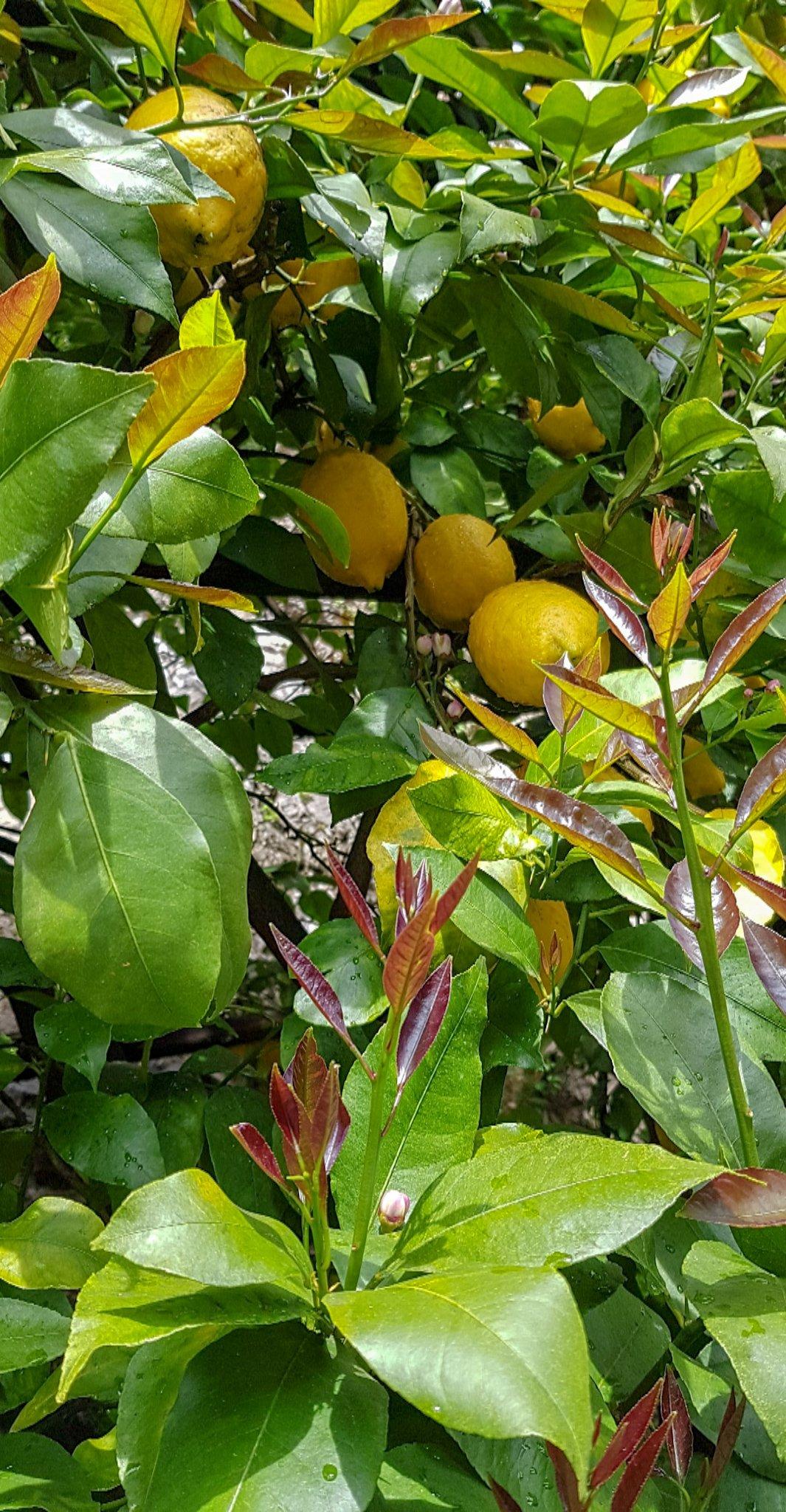conny doll lifestyle: Limone sul Garda, Gardasee, Zitronen, Ausstellung, Sightseeing