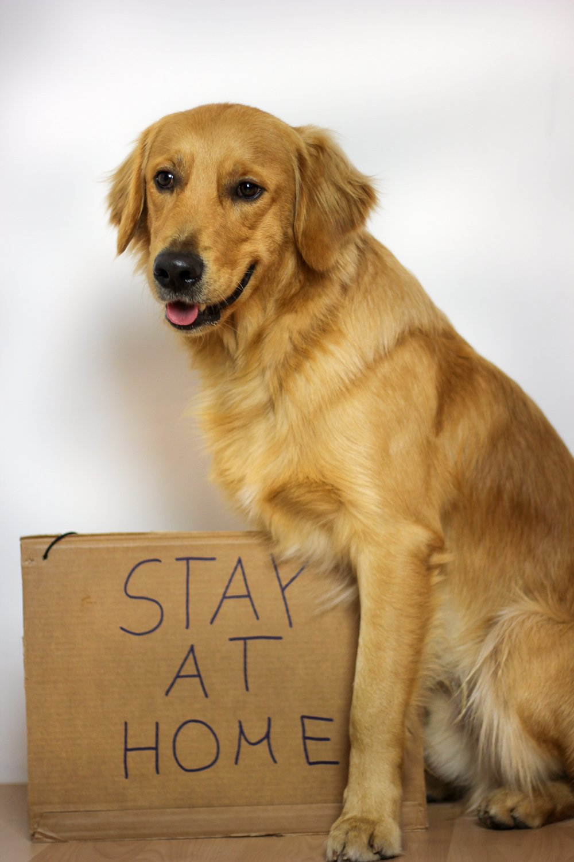 conny doll lifestyle: hund, bleib zu Hause, stay at home, corona, covid-19, virus, corona-krise, quatantäne, soziale distanz, Ausgangssperre